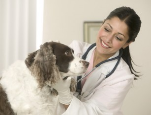 - veterinary - CVS Group dashes to all-time high as acquisitions boost dividend